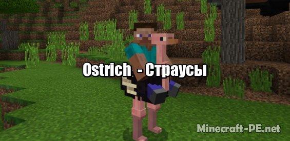 Мод Ostrich  [1.6] [1.5] (Страусы)]